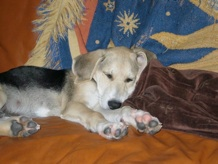 Eli as a puppy